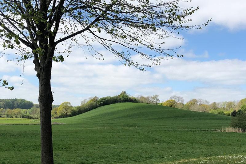 Johanna Cordes Park
